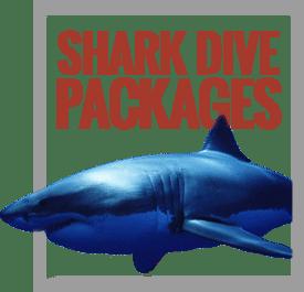 shark-diving-specials